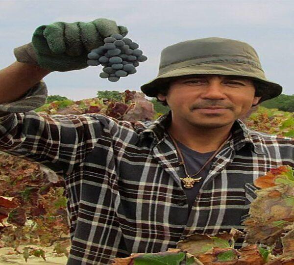 Lisbon Vineyard & Wine Tasting Tour with Transfer