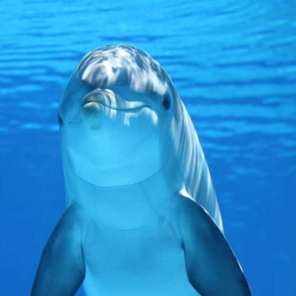 Dolphin Watching Public Cruise Albufeira Activities In Portugal