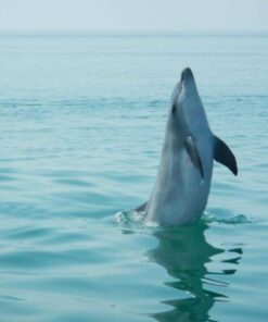 Dolphin Watching Sesimbra