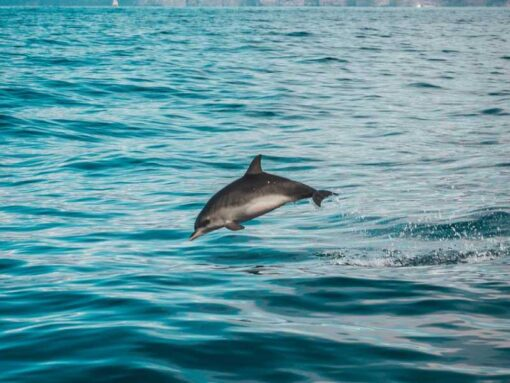 Dolphin Watching Public Cruise Albufeira