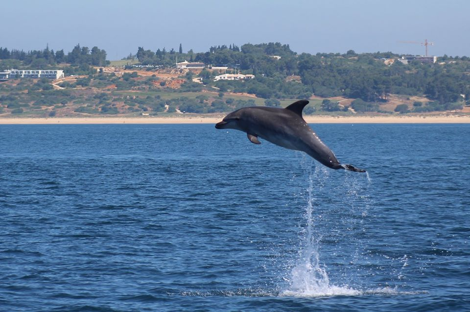 Dolphin Watching Lagos